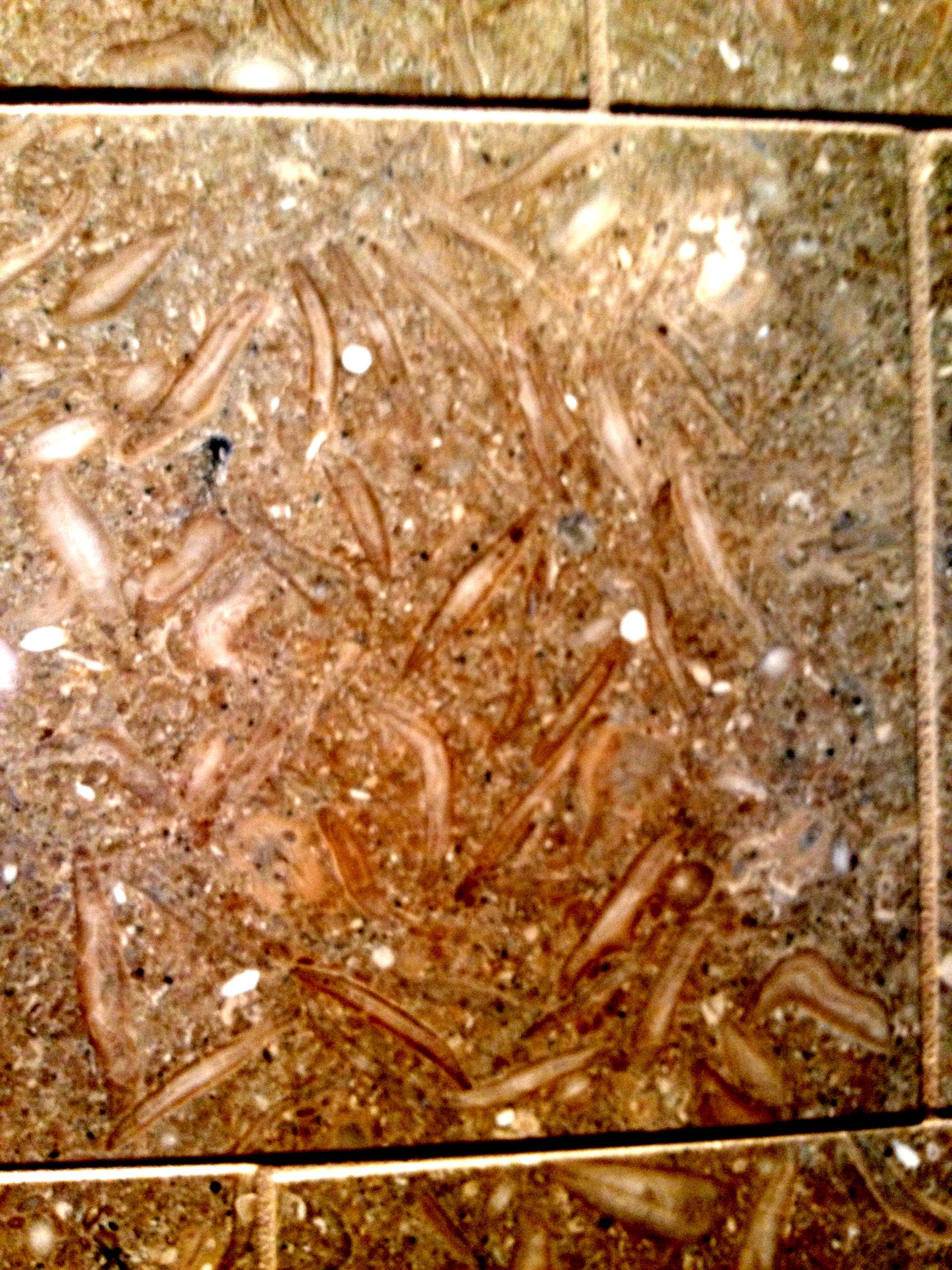 limestone shower tiles: bathroom remodel